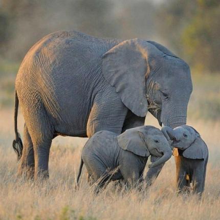 4 Days Tarangire, Ngorongoro and Manyara
