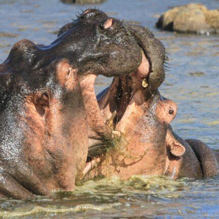 5 Days Tarangire, Ngorongoro and Manyara