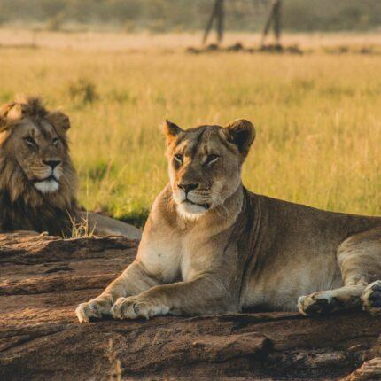 7 Days Serengeti, Ngorongoro and Tarangire
