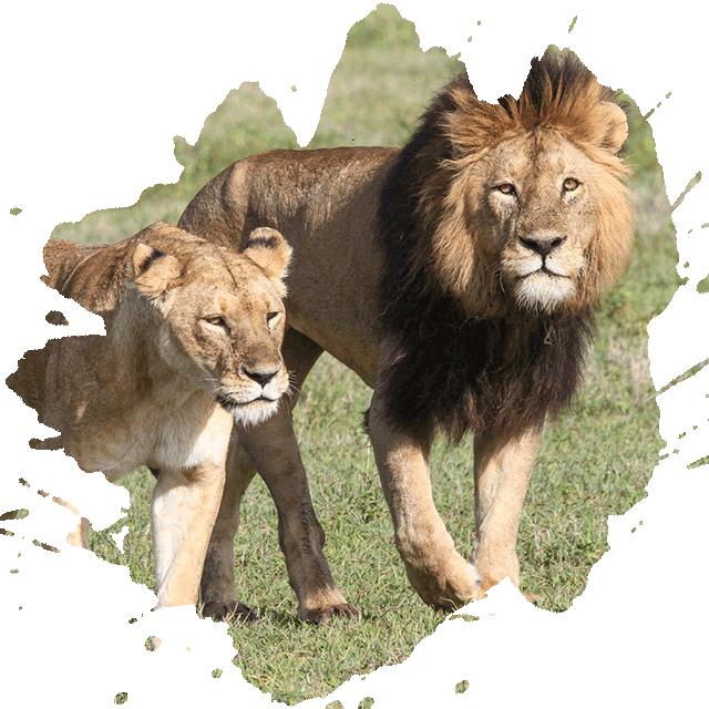 Affordable Tanzania Safaris